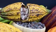 Kakaofrucht Und Kakaobohnen Or...