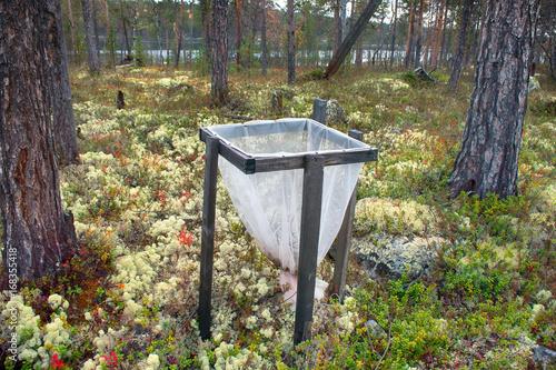 Fotografie, Obraz  Litter traps, taiga, lichen pine forest