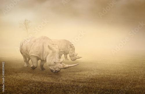 two rhinos grazing on a foggy morning