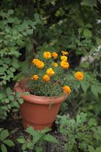 Dekoracje Ogrodowe - Kwiaty By...