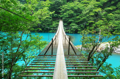 Fotografie, Obraz  静岡、寸又峡の夢の吊り橋