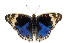 Isolated Dorsal View Of Male B...