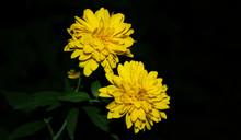 Flower, Yellow, Nature