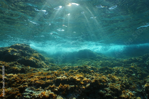 fototapeta na lodówkę Underwater sunlight through the water surface seen from a rocky seabed with algae in the Mediterranean sea, natural scene, Catalonia, Costa Brava, Spain