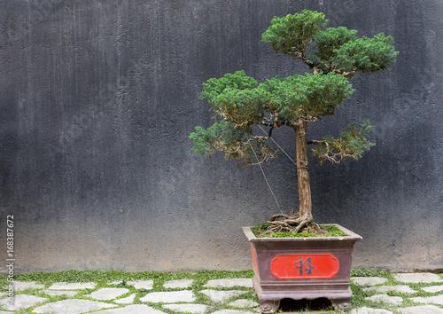 Bonsai Baum Mit Rot Verziertem Topf Vor Schwarzer Wand In Hanoi