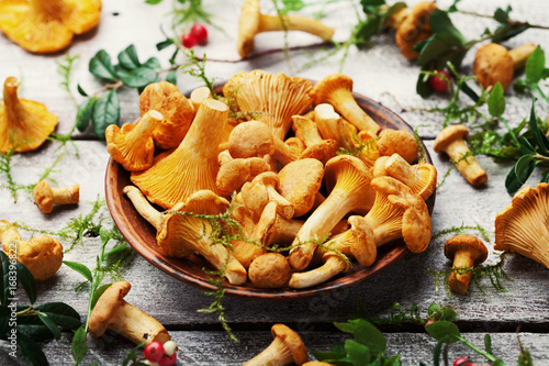 Autumn mushrooms chanterelle (cantharellus cibarius) in plate decorated forest plants and moss on rustic wooden table.