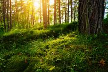 Summer Forest Undergrowth Vege...
