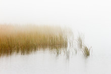 Reeds In Foggy Seascape
