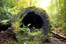 Log Dwelling