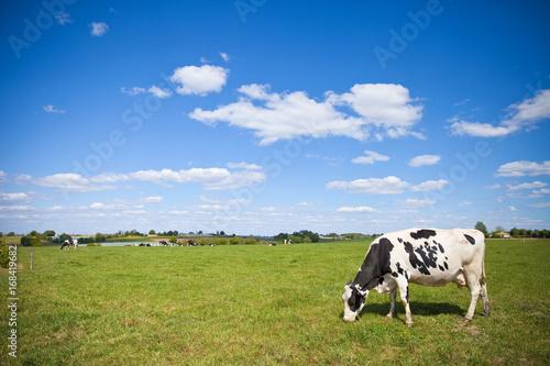 Poster de jardin Vache Campagne et vache en France