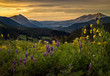 Colorful wildflower field above Crested butte at sunrise