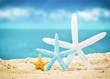 seashells on the summer beach with sand