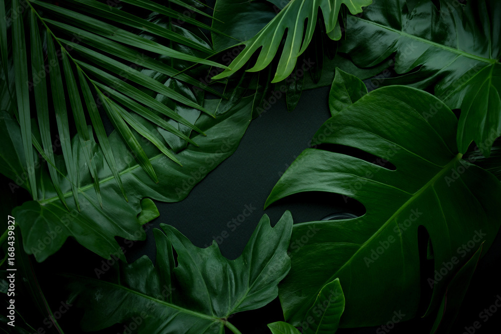 Fototapeta Real leaves with white copy space background.Tropical Botanical nature concept design.