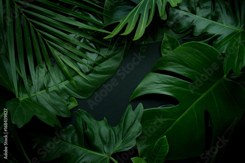 Foto Real leaves with white copy space background