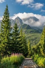 Panel Szklany Do gabinetu lekarskiego/szpitala Tatra mountains, Poland landscape, tourist trail in Gasienicowa valley (Hala Gasienicowa), summer