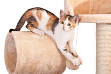 Portrait Of Nice Kitten On Iso...
