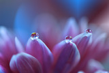 Gentle romantic artistic image. Soft pastel background blur .Reflection of the flower in the dew drop.Shallow depth of field.Modern art.Close up.Abstract macro photo with water drops.
