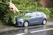 Leinwanddruck Bild - Abgebrochener Ast beschädigt geparktes Auto