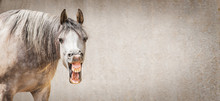 Funny Horse Face With Open Mou...