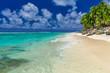 Palm trees on the vibrant beach, Cook Islands, Rarotonga
