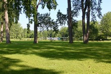 The Green Grass Of The Park Wi...