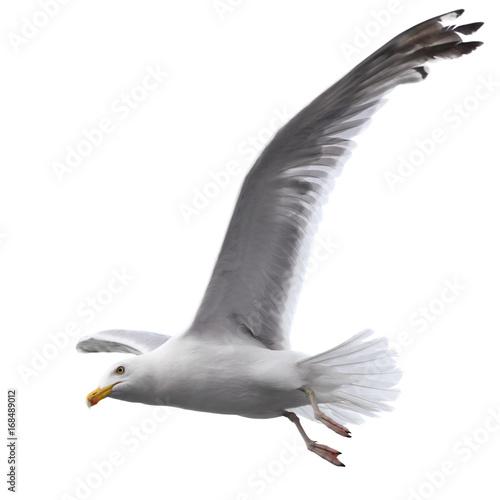 Flying sea gull Wall mural