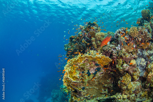 Obraz na dibondzie (fotoboard) Piękna rafa koralowa z sealife