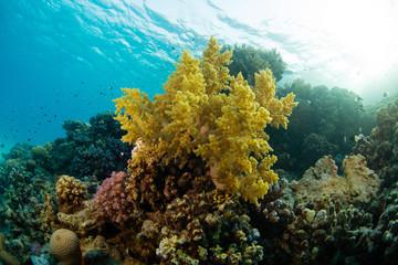 Naklejka na ściany i meble Beautiful coral reef with sealife