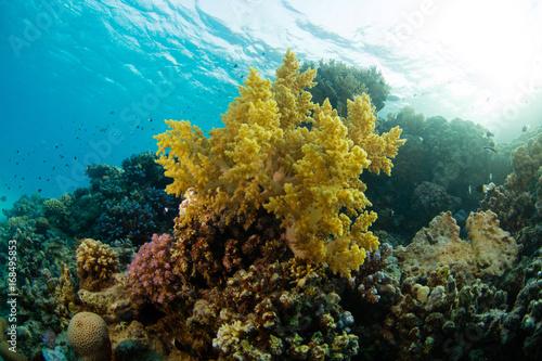 Staande foto Koraalriffen Beautiful coral reef with sealife