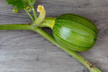 Close Up Of Small Baby Pumpkin Growing