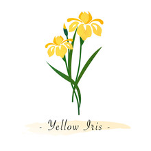 Colorful Watercolor Texture Vector Botanic Garden Flower Yellow Iris