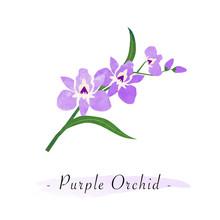 Colorful Watercolor Texture Vector Botanic Garden Flower Purple Orchid