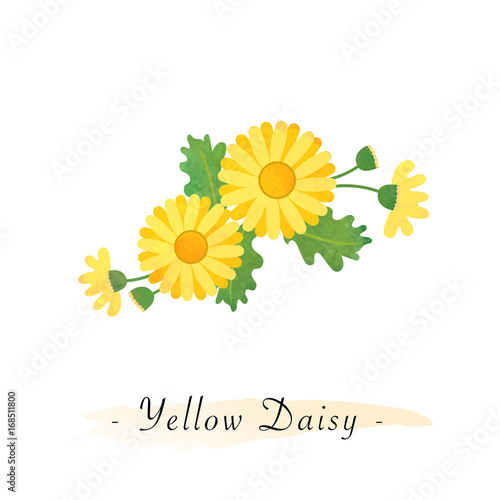 Colorful watercolor texture vector botanic garden flower asteraceae yellow daisy Canvas Print