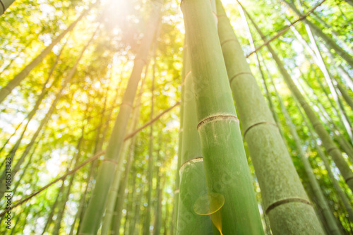 Canvas Prints Bamboo bamboo forest