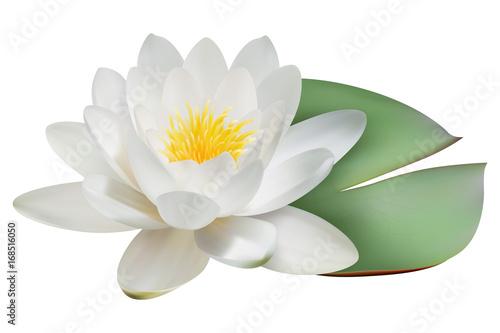 Fotografía Realistic water lily