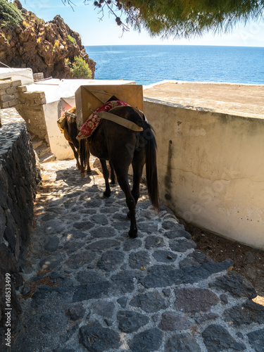Packed mules on the way down the stone stairs of the island of Alicudi Wallpaper Mural