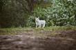 Little dog running in park