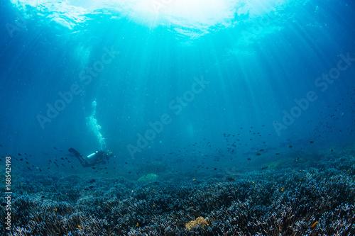 Fototapeta Sunbeams off to reef and scuba diver