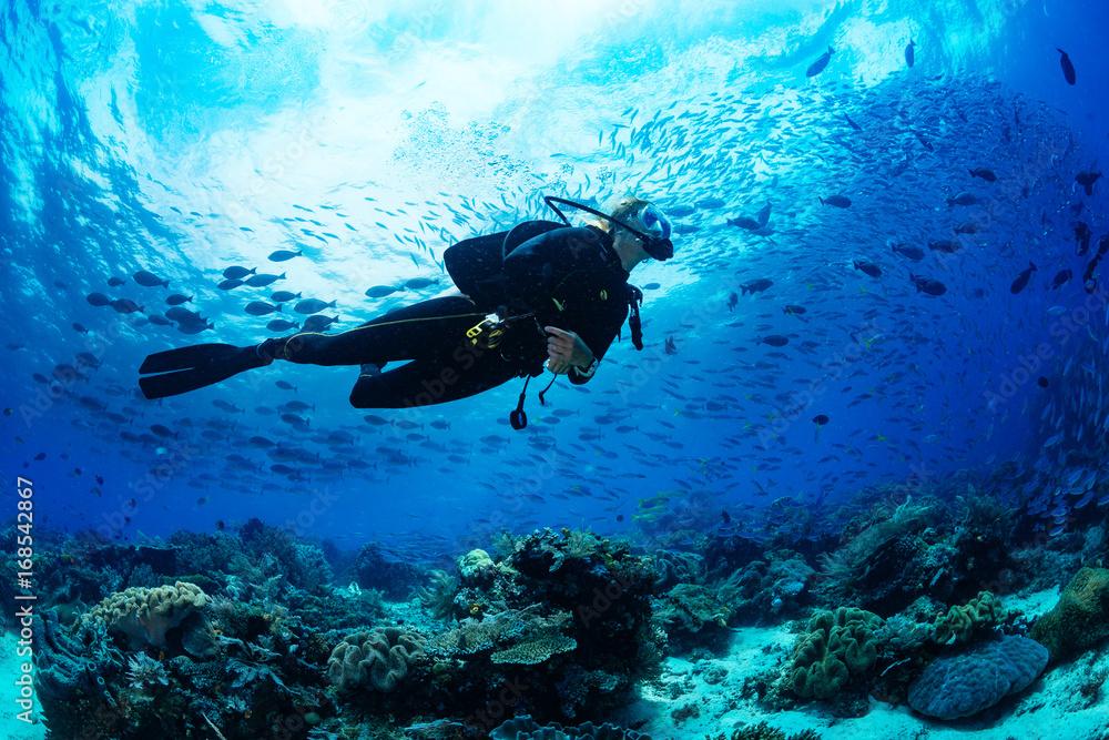 Fototapeta Scuba diver on coral reef