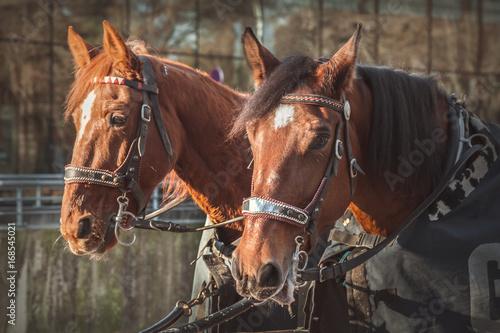 Fotografia, Obraz  Horses