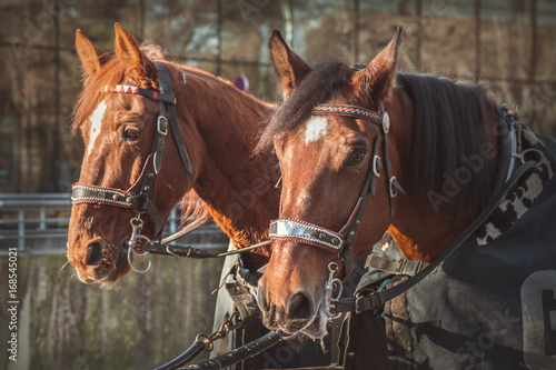 Valokuva  Horses