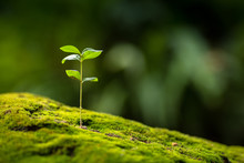 Close Up Young Plant Growing O...