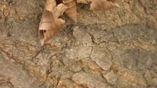 Achemon Sphinx Moth On A Tree
