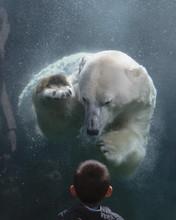 Child's Unexpected Encounter  With A Curious Polar Bear 3