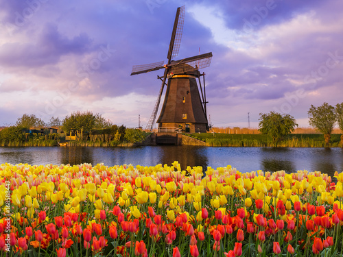 Photo  Windmills and flowers in Netherlands