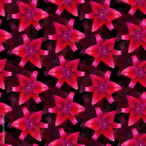 Lily Red pattern seamless. Beautiful flower background