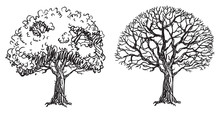 Bare Trees. Two Vector Bare Tr...