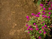 Purple Fuscia Flower Blooms Br...