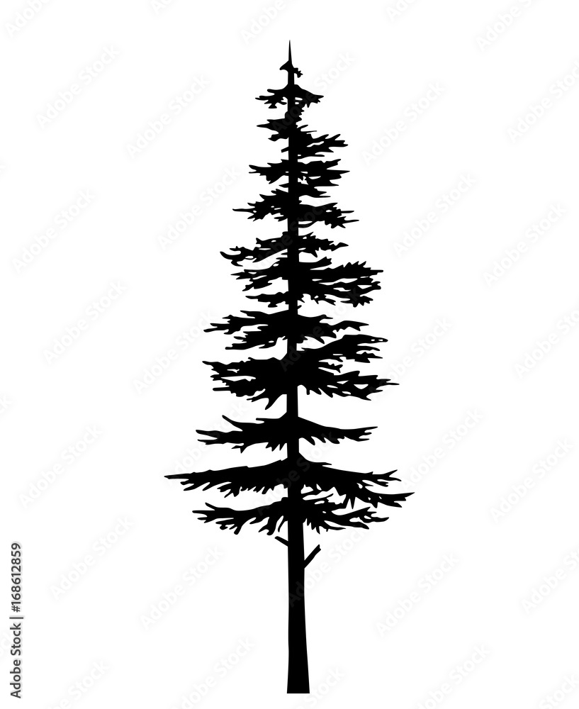 Fototapety, obrazy: tree pine silhouette, vector isolated silhouette of a coniferous tree. Can be used in design, illustration, tattoo.