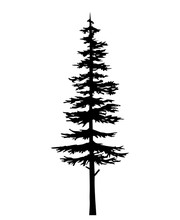 Tree Pine Silhouette, Vector I...